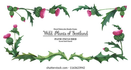 Watercolor hand painted header frame Plants of Scotland. Thistle on a white background. Isolated, path included.