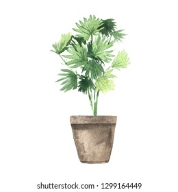 Watercolor hand painted house green plant in flower pot. Set of floral elemnts isolated on white. Decorative greenery collection perfect for print, poster, card making and scrapbooking design
