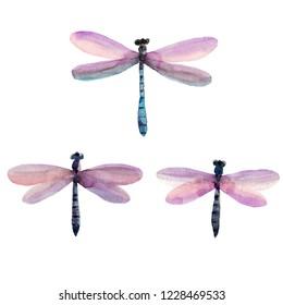 Watercolor hand painted illustration - dragonflies set