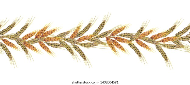Watercolor hand painted isolated elements on white background. Colorful seamless horizontal band with realistic wheat ears.