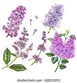 Watercolor hand painted lilac. Can be used as romantic background for web pages, wedding invitations, greeting cards, postcards, textile design, package design, patterns, prints, and so on.