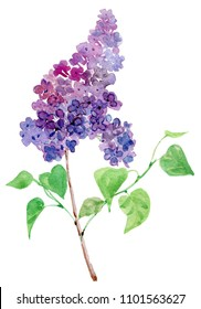 Watercolor hand painted lilac flowers. flowers, lilacs, spring, bouquet