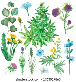 Watercolor hand painted nature herbal plants set with yellow dandelion, wormwood, purple lavender, milk thistle, blue chicory flowers, green hemp weed and eucalyptus leaves motley grass collection