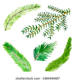 Watercolor hand painted nature set with different green christmas tree fir branches isolated on the white background
