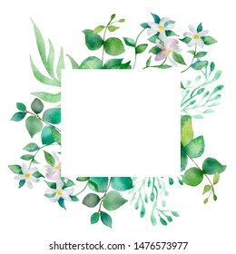 Watercolor hand painted nature squared frame with green eucalyptus leaves and branches and white blooming bergamot flowers for invitations and greeting cards with the space for text