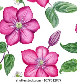 Watercolor hand painted pink clematis pattern. Can be used as romantic background for web pages, wedding invitations, greeting cards, postcards, textile design, package design, patterns, prints.