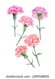 Watercolor hand painted pink flowers.  Can be used as romantic background for web pages, wedding invitations, greeting cards, postcards, textile design, packaging design, posters, prints, patterns.