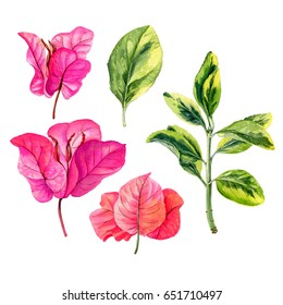 Watercolor hand painted pink flowers.. Can be used as background for web pages, wedding invitations, greeting cards, postcards, textile design, package design, wallpapers, prints, patterns and so on.