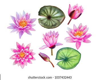 Watercolor hand painted pink water lily flowers. Can be used as romantic background for web pages, wedding invitations, greeting cards, postcards, textile design, package design, patterns, prints.