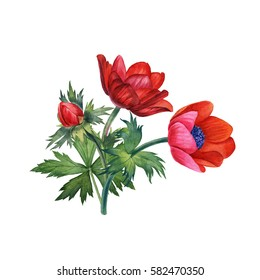 Watercolor hand painted red flowers. Can be used as romantic background for web pages, wedding invitations, greeting cards, postcards, textile design, package design, wallpapers and so on.