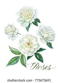 Watercolor hand painted roses.Can be used as romantic background for web pages,wedding invitations, greeting cards, postcards, textile design, package design, patterns, prints, and soon.