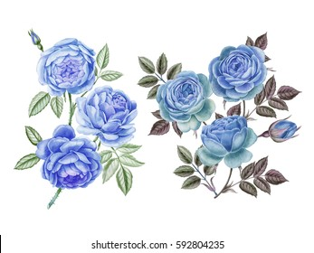 Watercolor hand painted roses. Can be use as romantic backgrounds for web pages, wedding invitations, greeting cards, postcards, textile design, package design, patterns and so on.