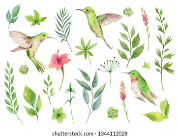 Watercolor hand painted set with green leaves and Hummingbird. Floral illustration isolated on white background.
