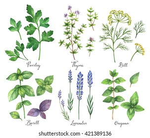 Watercolor hand painted set with wild herbs and spices. The perfect design for greeting card,  packaging, natural and organic products. Illustration for food, farmers production and medicine.