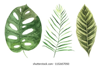 Watercolor hand painted tropical leaves and plants. Trendy Green jungle foliage clip art perfect for summer wedding invitation and party card making