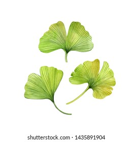 Watercolor hand painted tropical leaves. Can be used as print, postcard, invitation, greeting card, packaging design, textile design, stickers, poster, and so on.