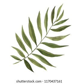 Watercolor hand painted tropical palm leaf isolated on white. Green jungle foliage illustration perfect for summer wedding invitation and party card making