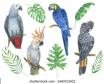 Watercolor hand painted tropical parrot bird, flowers, exotic birds,leaves, plants. Set perfect for summer wedding invitation and party card making