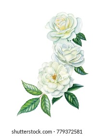 Watercolor hand painted white roses. Can be used as romantic background for web pages, wedding invitations, greeting cards, postcards, textile design, package design, prints, patterns, wallpapers.