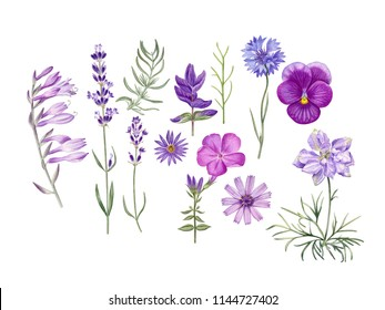 Watercolor hand painted wild flowers.  Can be used as romantic background for web pages, wedding invitations, greeting cards, postcards, textile design, packaging design, posters, prints, patterns.
