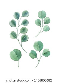 Watercolor hand painting eucalyptus leaves. Can be used as postcard, print, element design, invitation, greeting card, packaging design, textile design, patterns, stickers, and so on.