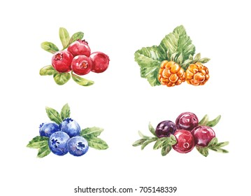 Watercolor hand-drawn berries on the white background