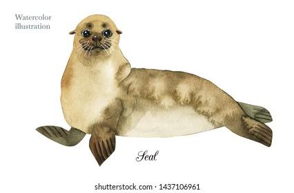 Seal Animal Watercolor Images, Stock Photos & Vectors | Shutterstock