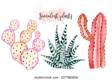 Watercolor hand-drawn illustration with cactus and succulents. Green house plants illustrations.