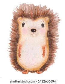 Watercolor hand-drawn illustration with  hedgehog on  white background.