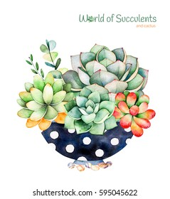 Watercolor handpainted succulent plant in painted pot and cactus flowering.Watercolor illustration on white background.Perfect for your project,cover,wallpaper,pattern,gift paper,wedding,logo etc