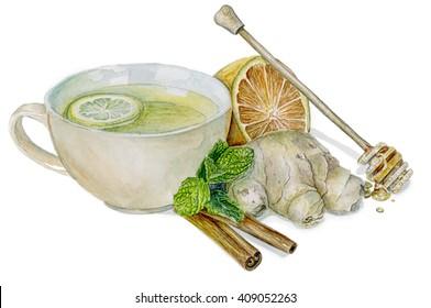 watercolor healthy tea  illustration