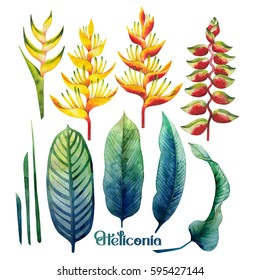 Watercolor heliconia collection. Hand painted exotic leaves and flowers isolated on white background