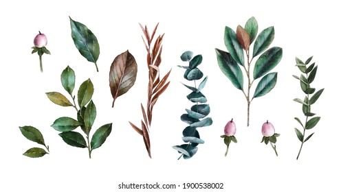 Watercolor herbs and greenery on white background. Mognolia leaves, eucalyptus, hypericum. Wedding delicate plants. Vintage green.  Botanical hand drawn illustration.