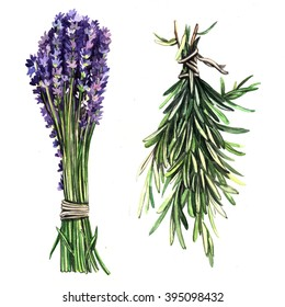 Watercolor herbs Lavender and rosemary. Floral watercolor illustration. Illustration for greeting cards, invitations, and other printing projects.