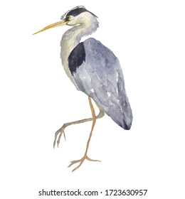 Watercolor heron bird isolated on white background. Hand drawing illustration of Grey heron. One Japonese bird. Perfect for cards, print, sticker, greeting card.