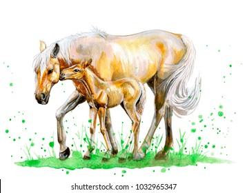 Watercolor horse with foal on grass. Hand drawn illustration.