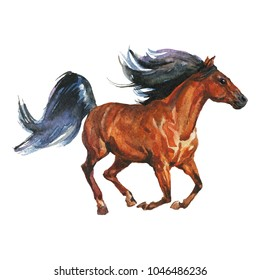 Watercolor horse runs galloping. Hand drawn beautiful arabian, mustang,  thoroughbred stallion on white background. Painting animal illustration