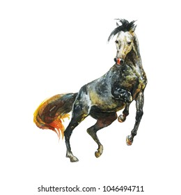 Watercolor horse runs galloping. Hand drawn beautiful appaloosa stallion on white background. Painting animal illustration