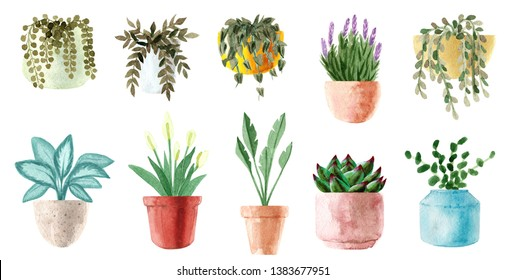 Watercolor houseplants. Hand painted house green plants in flower pots. Flowers isolated on white background. Potted plant collection. Set of house indoor plants. Clipart for invitation card, greeting