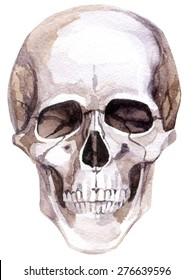 Watercolor human skull. Hand painted illustration