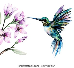 Watercolor hummingbird and flowers. Wild bird and brunch with leaves, pink flowers isolated on white background. Floral tropical illustration hand painting.