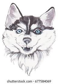 Watercolor husky dog
