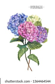 Watercolor hydrangea composition bouquet for postcard or decoration. Nice vintage flowers.