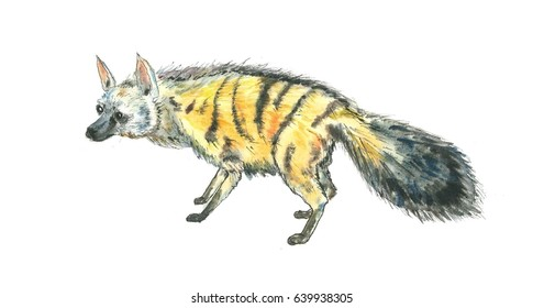 Watercolor Illustration of Aardwolf