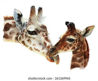 watercolor illustration about a couple of giraffes