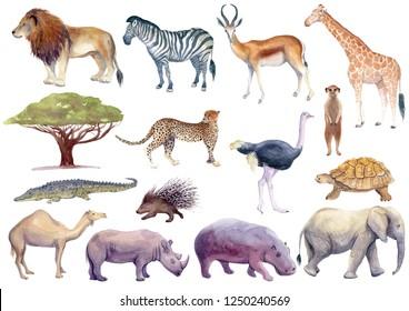 Watercolor illustration of African Animals: lion, zebra, gazelle, antelope, giraffe, cheetah, ostrich, meerkat, suricate, tortoise, camel, rhino, hippo, elephant, crocodile, isolated white background