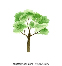 Watercolor illustration of african tree.Hand drawn african acacia isolated on white background.