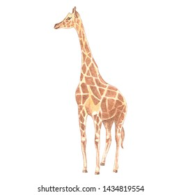 "Watercolor illustration of the animal ""Orange Giraffe"""