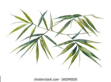 Watercolor illustration of bamboo leaves , on white background