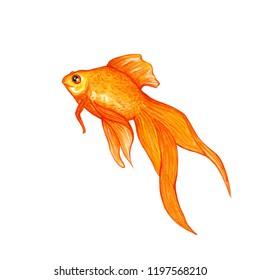 watercolor illustration beautiful golden fish